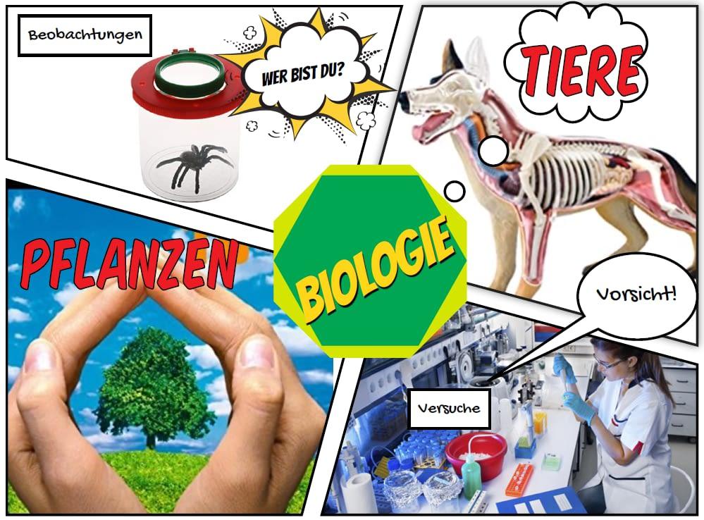 Informationen über das Fach Biologie